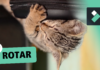 🔄 ROTAR o GIRAR Vídeos en Filmora ► Curso